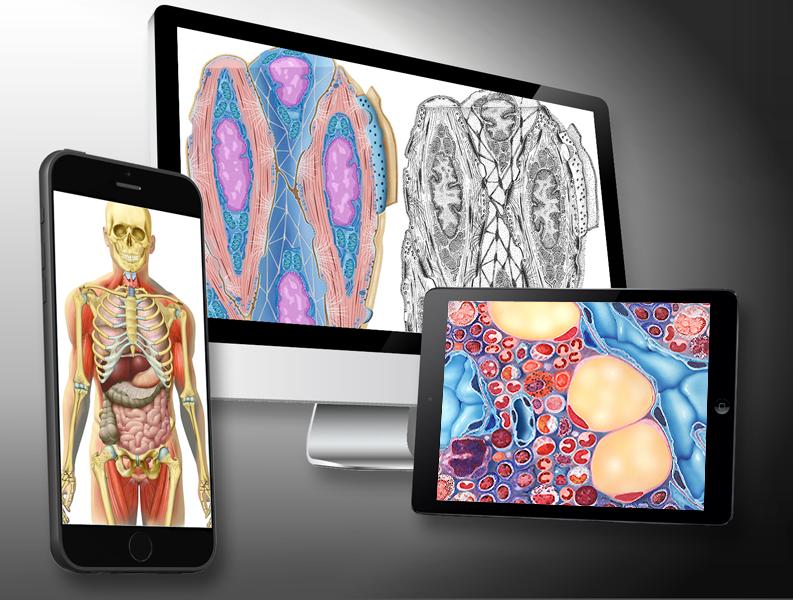 MediDesign Frank Geisler, Bilder Medizin Wissenschaft Wissenschaftsgrafik
