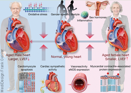 Grafikdesign Poster Kardiologie Herz Herzerkrankung