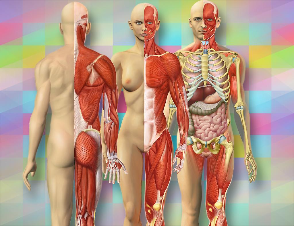 Illustrationen Anatomie Mensch Frank Geisler