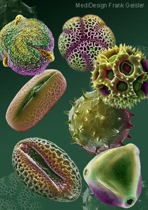 Medical Art Bild Pollen Allergie Pollenallergie