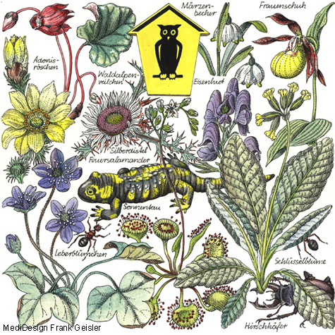 Zeichnung Biologie Fauna Flora Natur Naturschutz