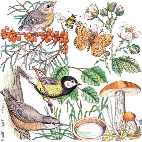 Zeichnungen Illustrationen Kinderbuch Fauna Flora